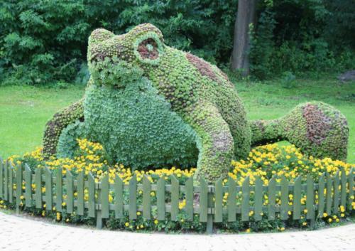 krynica-zaba-z-kwiatow
