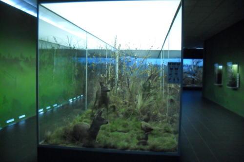 muzeum-gornoslaskie14