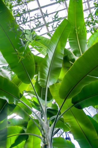 palmiarnia-gliwice-1