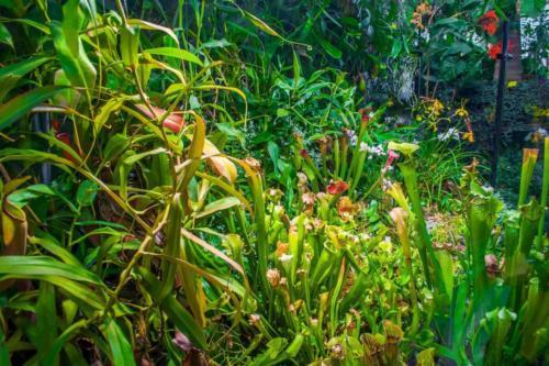 palmiarnia-gliwice-10