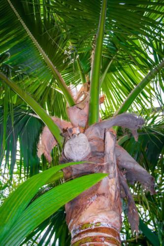palmiarnia-gliwice-15