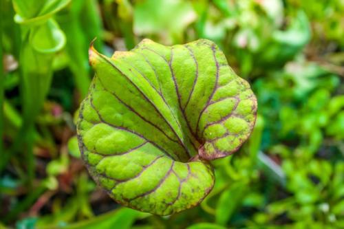palmiarnia-gliwice-8