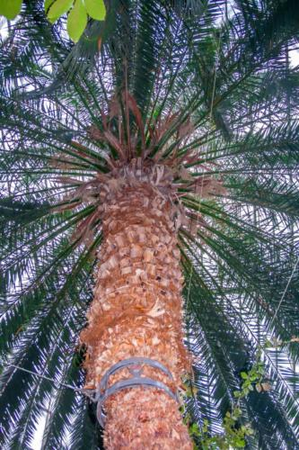 palmiarnia-gliwice18