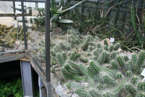 botanik-zabrze17