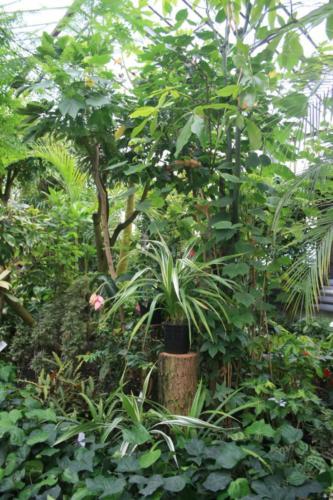 botanik-zabrze22