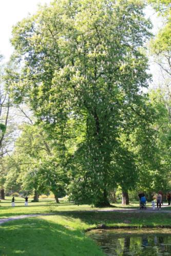 plawniowice-park-3