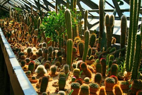 ogrod-botaniczny