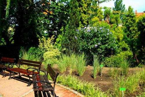 ogrod-botaniczny10