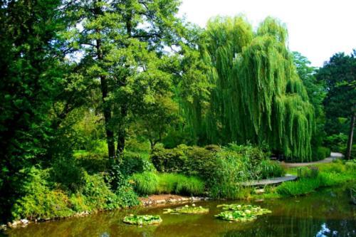 ogrod-botaniczny12