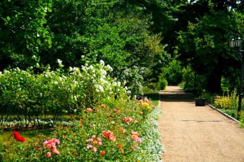 ogrod-botaniczny15