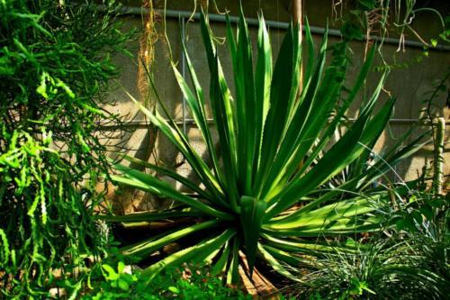 ogrod-botaniczny2