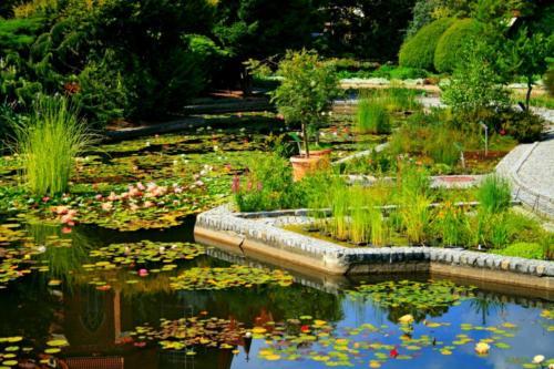 ogrod-botaniczny9