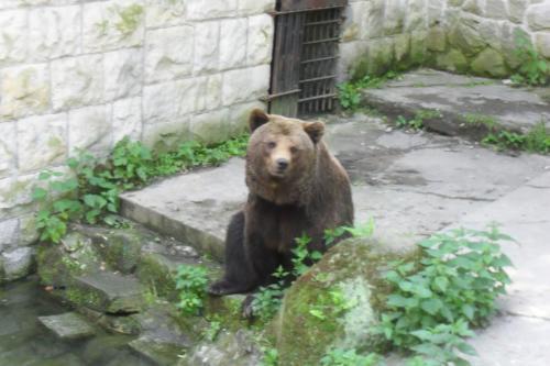zoo-chorzow-312